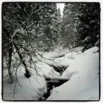 Traumhafter Winterwald im Schönjungferngrund